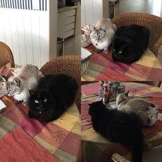 Irmãozinhos voltando a ficar juntos #cats