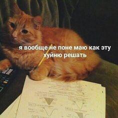 Funny School Memes, Funny Relatable Memes, Funny Jokes, Funny Cat Videos, Funny Cats, Hello Memes, Happy Memes, Russian Memes, Current Mood Meme