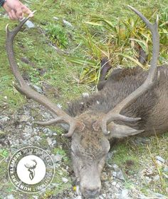 Shane Simpson with a 10pt beauty from the Ruahines taken at 400yard using a 7mm-375r Tikka M695