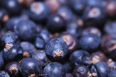 9 Fresh, Juicy Berry Varieties to Tempt Your Taste Buds: Huckleberries