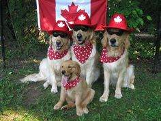 "Happy Canada Day from our friends, Cooper, Carson, Crosby and Colby (aka ""Linus"" recently adopted from the Ontario SPCA Muskoka Animal Centre)!!"