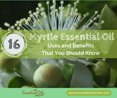Myrtle Essential Oil can be used for many things, including helping your breathing, wounds and libido. Find out more about Myrtle Essential Oil here! Myrtle Essential Oil, Essential Oil Uses, Easential Oils, Doterra Oils, Young Living Oils, Young Living Essential Oils, Essential Oils For Breathing, Oils For Sinus, Essential Oil Diffuser Blends