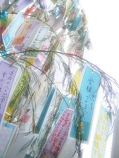 tanabata and mikeran