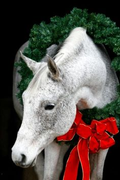 horse. equine. christmas. wreath. gray horse. grey horse.