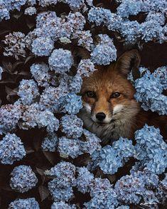 Surreal Animals Photo Manipulations by Karen Cantú Q #art #photography #KarenCantúQ #SurrealAnimalsPhotoManipulations