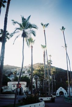 Didja know that palm trees are NOT native to Cali, and that it costs a friggin' FORTUNE to keep them watered?