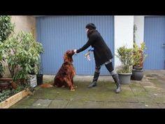 Hundetrick - auf Kommando bellen oder Gib Laut