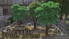 Fruit Trees by Oloriell