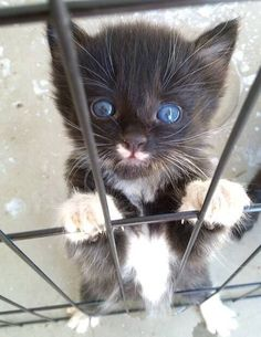 This huggable escape artist. | 39 Overly Adorable Kittens To Brighten Your Day