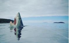 Rare image of a shark stepping on a LEGO. Rare Images, Rare Pictures, Funny Pictures, Funny Animal Photos, Funny Animals, Animal Funnies, Shiba Inu, Early Childhood Quotes, Step On A Lego