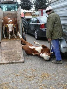These are baby calves that are stolen from their mothers for the dairy and veal industry. PLEASE STOP CONTRIBUTING TO ANIMAL CRUELTY AND GO VEGAN.