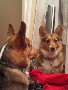 """Milo checking himself out before going to the park......""""Look out ladies!"""""""