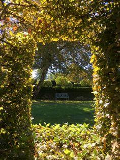 Les charmes de la chambre de verdure se parent de leurs premières couleurs automnales #eyrignac #jardin #garden #charme #automne #couleurs #greenroom
