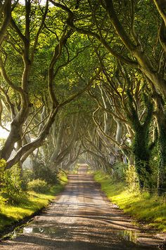 The Dark Hedges, Antrim, Ireland  An array of 300 year old beech trees that form an arch like tunnel the length of the Bregagh road near Armoy in County Antrim