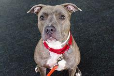 ASPCA Pet of the Week: Pixie | ASPCA.  Aug. 29