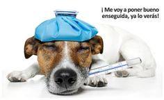 Campaña Clínica Veterinaria