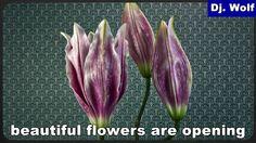 Dj. Wolf: beautiful flowers are opening