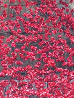 Close up of the ceramic poppies which make up the Weeping Window installation