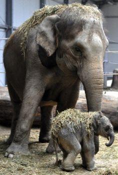 Amazing wildlife - Elephant with baby photo