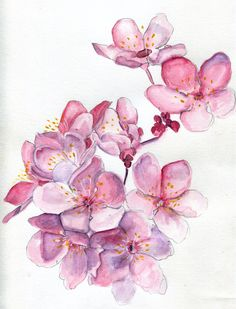 Sakura Sweeties Watercolor Goua - havekat | ello