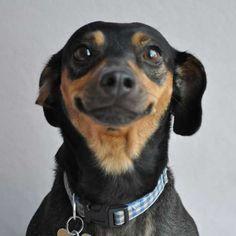 Ara (Dachshund / Terrier blend) needs a fun-loving San Diego family. Helen Woodward Animal Center Pone (858) 756-4117