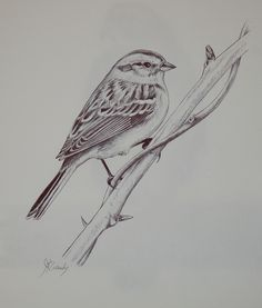 Sparrow Bird Drawing The Effective Pictures We Offer You About funny Bird A quality picture can tell Pencil Sketch Drawing, Bird Sketch, Pencil Art Drawings, Bird Drawings, Animal Drawings, Animal Sketches, Art Sketches, Sparrow Drawing, Sparrow Tattoo