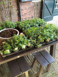 Kruidentuin op terras tafels