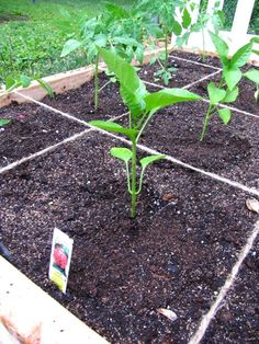 """Mel Bartholomew's book """"All New Square Foot Gardening"""" tried out on the Borrowed Abode. LOVE IT!"""