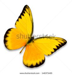 Yellow butterfly isolated on white background