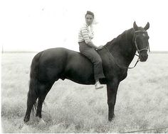 Elizabeth Taylor on Highland Dale, American Saddlebred stallion as War Winds in the movie Giant.  Highland Dale, trained by Ralph McCutcheon, also portrayed Black Beauty and Fury.