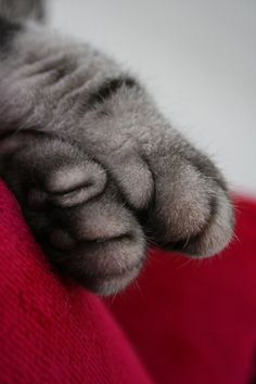 """Cats leave paw prints on your heart."""" --Anonymous - 05/04/2017"""