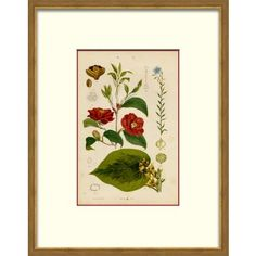 Check out this item at One Kings Lane! Floral Studies