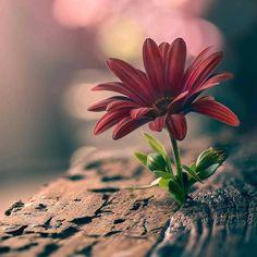 #flowers #flower #petal #petals #nature #beautiful #love #pretty #plants #blossom #sopretty #spring #summer #flowerstagram…