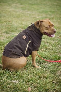 Check out this Canine Carhartt jacket! Make your own DIY dog coat using this detailed, downloadable Instructable.