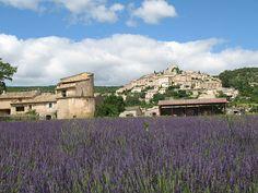 Young Living's lush lavender fields at the Simiane-la-Rotonde, France, Farm.