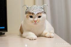 Aluminium Foil Hat http://www.exclusivepackagingny.com/