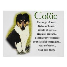 Tri Color Rough Collie Gifts