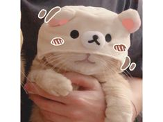 Animal Memes, Funny Animals, Cute Animals, Cute Cat Memes, Anime Halloween, Cat Skull, Cat Aesthetic, Avatar Couple, Kawaii Wallpaper