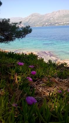 Dubrovnik Croatia, Croatia Travel, Cavtat Croatia, Croatian Coast, Boat Tours, Vacation Places, To Go, Things To Come, Amazing