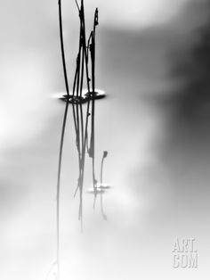 Silence Photographic Print by Ursula Abresch at Art.com