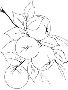 Frutas e legumes - MFP Desenhos1 - Álbumes web de Picasa