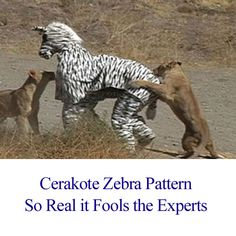 Like Making the Intern Wear the Zebra Suit - Funny Animal Memes and GIFs that are pure comedy gold. Pig Halloween Costume, Zebra Costume, Dog Halloween, Best Dog Costumes, Pet Costumes, Funny Animal Memes, Funny Animals, Funny Memes, Lion Pictures