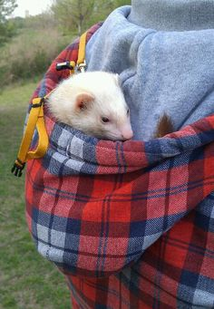 Lol Byder used to do this... ferrets LOVE hoods. They feel warm, cozy, and safe in them- it's just like their hammock!