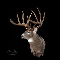 Deer Camp, Deer Hunting, Deer Mount Decor, Taxidermy Display, Big Deer, Deer Mounts, Deer Pictures, Mule Deer, White Tail