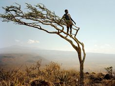 Long vistas and the dry season's withered vegetation enable keen eyes to spot game miles away. From a wind-bowed tree on a ridge, a man named Mahiya peers across rough Tanzania terrain where Hadza bands range.