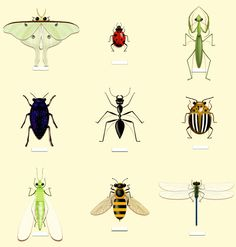 All of these guys can be found right here in our area!  For total, continuous protection of your home inside & out, give JEM Pest Solutions a shout! #jempestsolutions