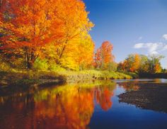 Sugar maples on a riverbank in Vermont show their peak colors in the fall. Vermont is the leading producer of maple syrup in the United States. About 77 percent of the state is forest, covered mostly with conifer, sugar maples and northern hardwoods trees. (Ron and Patty Thomas/Getty Images)