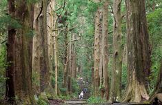Hiking Kumano Kodo, a Remote Ancient Pilgrimage Route in Japan via Atlas Obscura