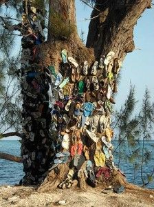 flip flop tree on Grand Cayman Island- that is sooo cool