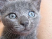 Blue @ YouPet.com This is Blue, a new friend of Mystic's. Blue was Star Pet of the Day and he's gorgeous.